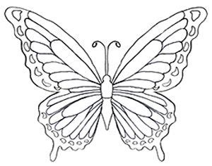 25 butterfly images drawing ideas butterfly pattern butterfly