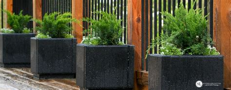 Evergreen Planters by Planting Container Evergreens Patio Paver Planters