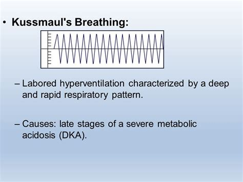 breathing pattern video respiratory system ppt video online download