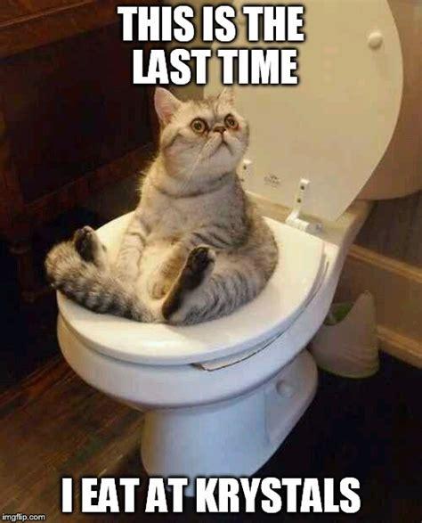 Meme Toilet - toilet cat imgflip