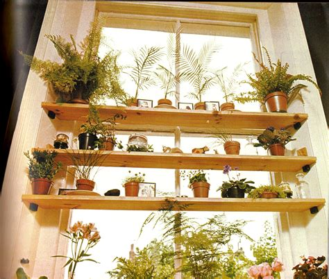 where to put plants in house plants page 5