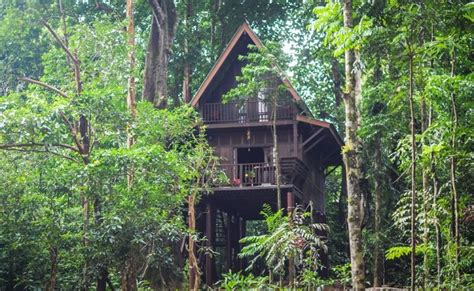jungle house music our jungle house in thailand our planet travel