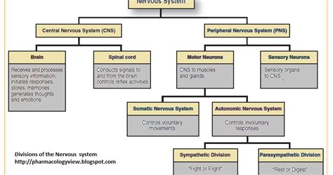 section 35 3 divisions of the nervous system pharmacology division of human nervous system
