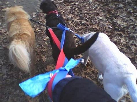 walking services near me fellas walking pet sitting service coupons near me in coventry 8coupons