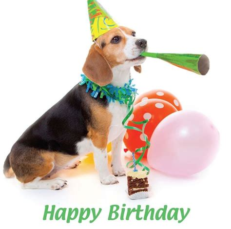 happy birthday puppy images 15 best images about beautiful birthday cards on blank cards posts and