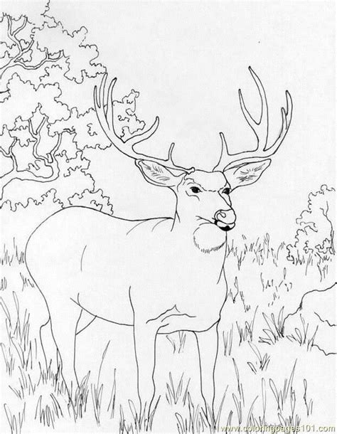 coloring page of a deer free deer coloring pages az coloring pages