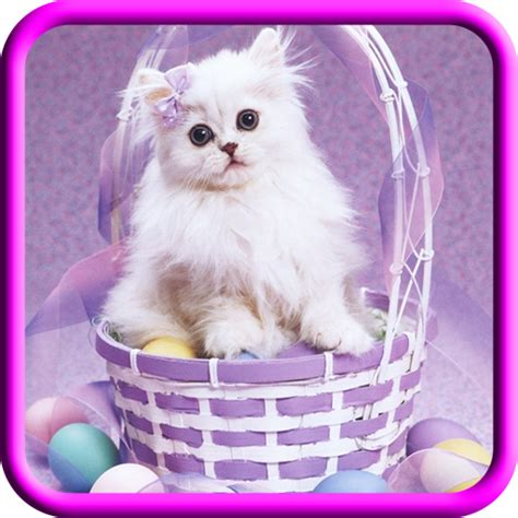 amazoncom cute cat images appstore  android