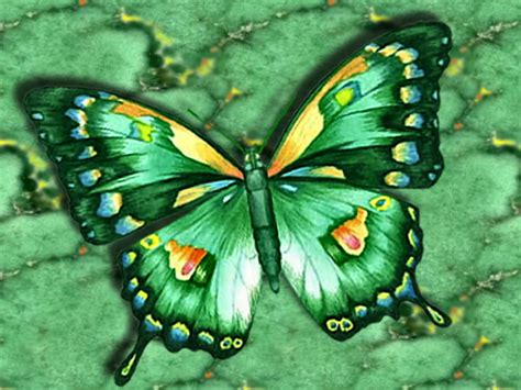 green butterfly wallpaper funny animal butterfly screensavers that move abstract green