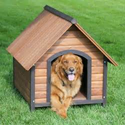 home with puppy step by step on how to build a house