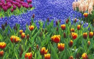 Garden Flower Images Carrie Bernard Flower Garden Wallpaper