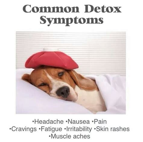 Symptoms Of Fasting Detox by 99 Best 10 Day Green Smoothie Cleanse Images On