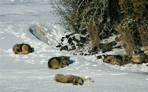 winters ice bridge  isle royale means