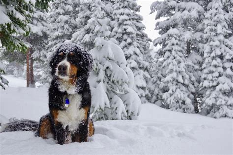 photos of snow snow photos late dumps snow in foothills mountains fox31 denver