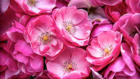 Blume Mit Rosa Blüten by Die 72 Besten Lila Blumen Hintergrundbilder