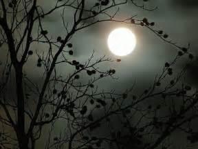 what are moon gardens landscape garden