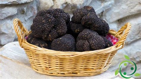 coltivare tartufi in casa how to grow truffles at home archivi