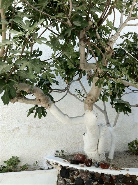 greek backyard designs 25 best ideas about greek garden on pinterest greece places to visit paros and
