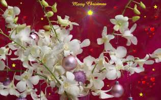 Christmas wallpaper background wallpapers9