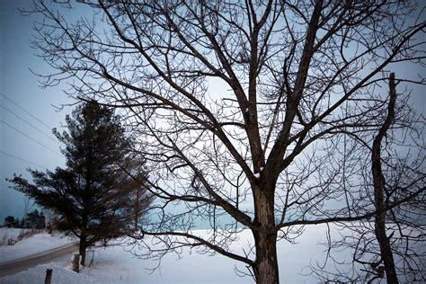 winter tree file tree in winter on the oak ridges moraine jpg