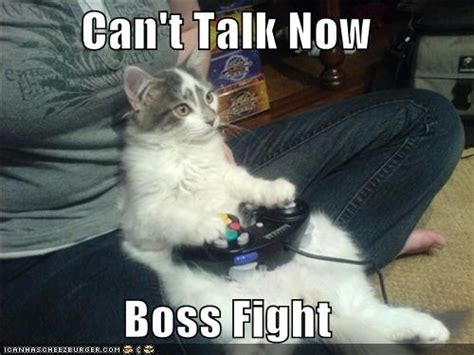 Cat Fight Meme - sorry who are you again 5 underdeveloped video game
