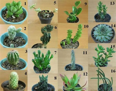 what are my cacti names god kiss everyone help me