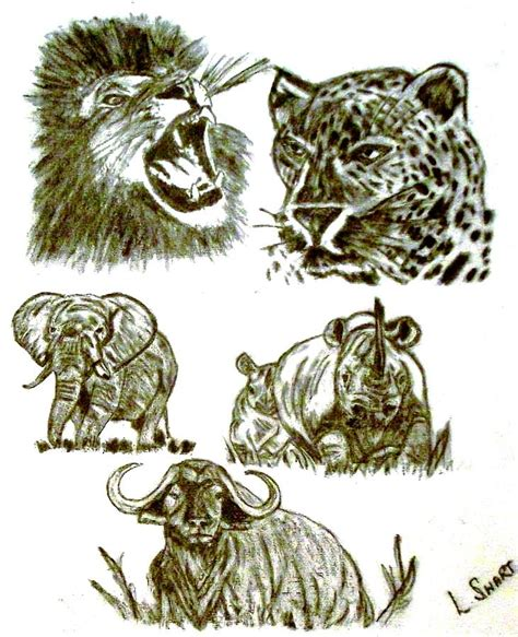 Big 5 Sketches by The Big 5 Drawing By Lynette Swart
