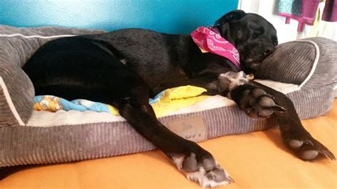 stuft pet bedding 17 best images about stuft pet beds on pinterest kos