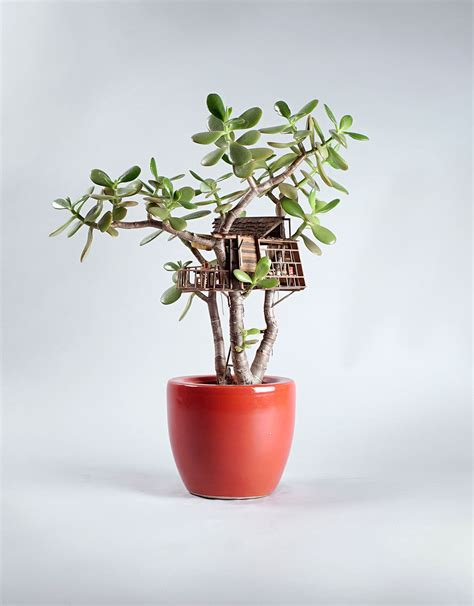 mini house plants miniature treehouse sculptures built around houseplants by