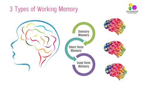 types of types of memory working memory tied to your child s