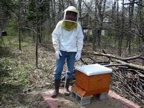 backyard beekeeping backyard beekeeping part 1 hiving the bees youtube