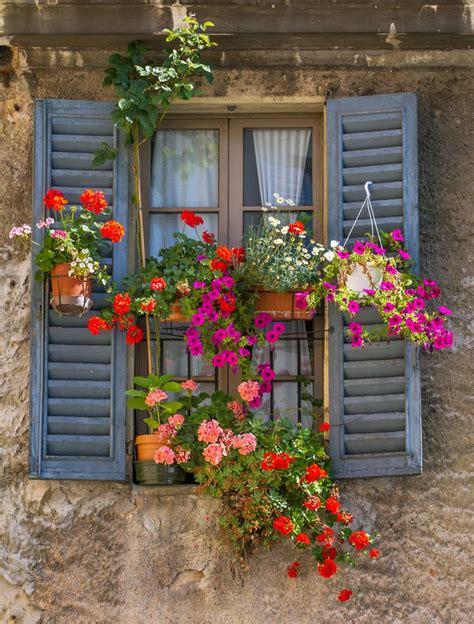 Imagenes Flores Pinterest | las 25 mejores ideas sobre fotos de flores en pinterest y