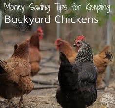 money with chickens how to make up to 12k a year with just 15 chickens books how to set up your beehive detailed