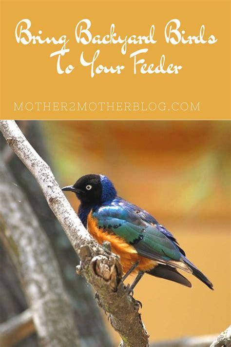backyard bird feeder how to bring backyard birds to your feeder mother2motherblog