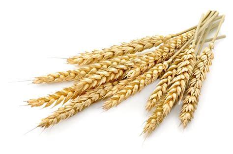 cuisine m馘iterran馥nne definition bl 233 p 226 tes riz graines c 233 r 233 ales et pains