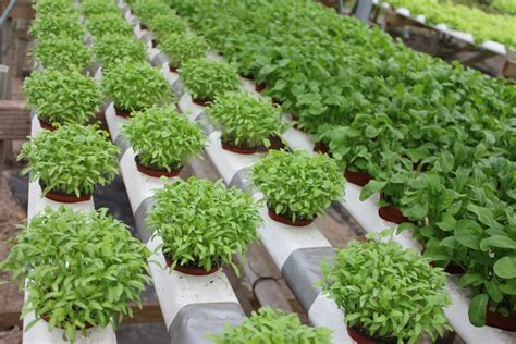 hydroponic nutrients  highly   grow  kind