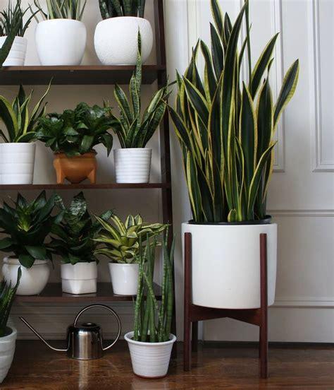 indoor plants dubai pots plants  dubai