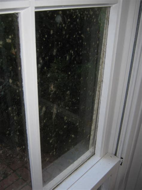 Mould Growing On Windows Designs Prevent Mould Moisture Solar Air Module