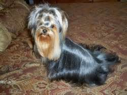 yorkie house cleveland tn contact yorkiehouse