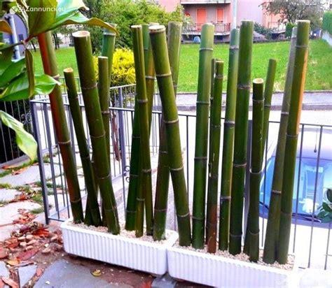 canne bambu da arredo canne di bambu bambu con diametri da 1 in vendita rimini