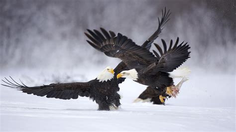 Amazing Animals Amazing Creativity Amazing Animals