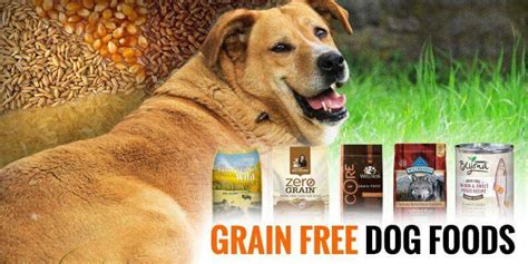 best grain free food 5 best grain free foods reviews and buying guide