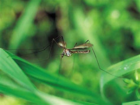 contro le zanzare in giardino rimedi naturali contro le zanzare