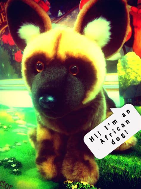 rain dog boiler room live show virtual clubbing life webkinz codes for free 2011 august