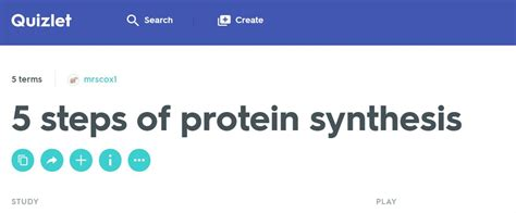 8 protein synthesis steps steps of protein synthesis mrs derochers science