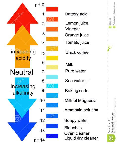 Ph Le by Ph Scale Stock Illustration Image Of Biochemical