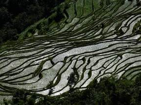 Custom Size Wall Murals rice terraces of the ailao mountains honghe prefecture
