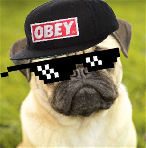 pug thug thug pug by ssrooks on deviantart