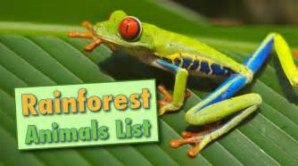 Plants And Animals In A Tropical Rainforest - rainforest animals list with pictures facts amp information