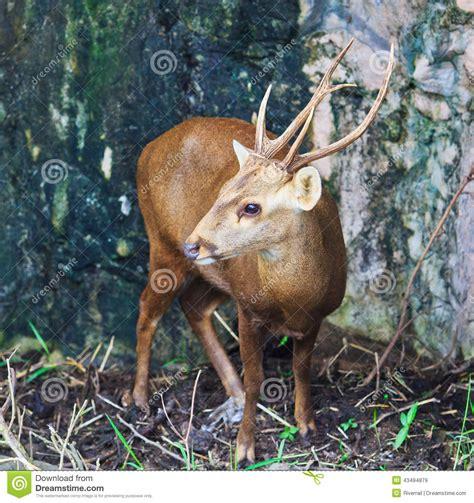 Reindeer Shed Antlers by Deer Stock Photo Image 43494879