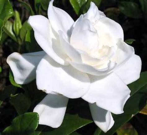 imagenes naturales mas bellas del mundo las rosas mas bellas del mundo en im 225 genes especiales en